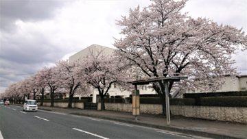 桜の季節も駆け足で~